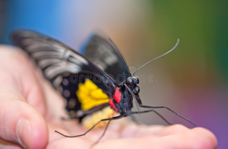 Face of red spot sawtooth butterfly stock image