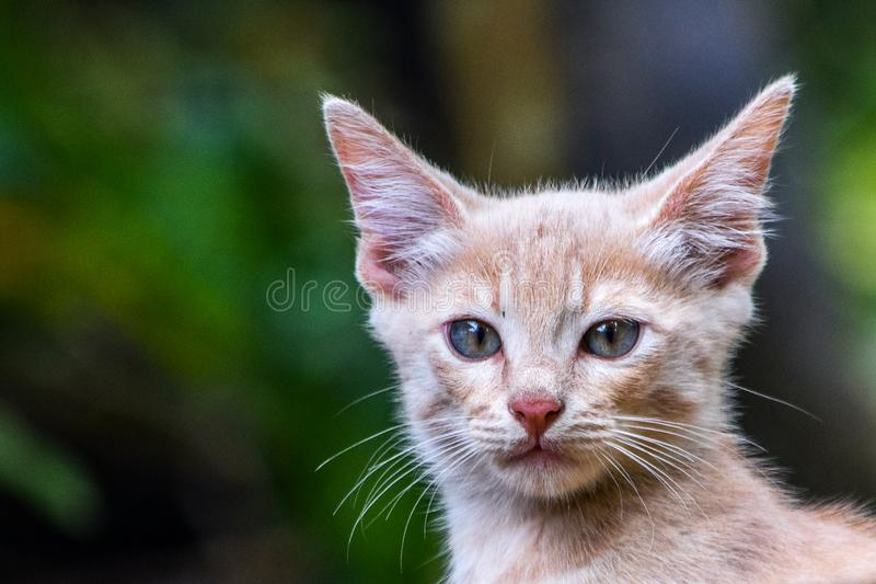Face to face domestic cat. Capture of a domestic cat face to face stock image