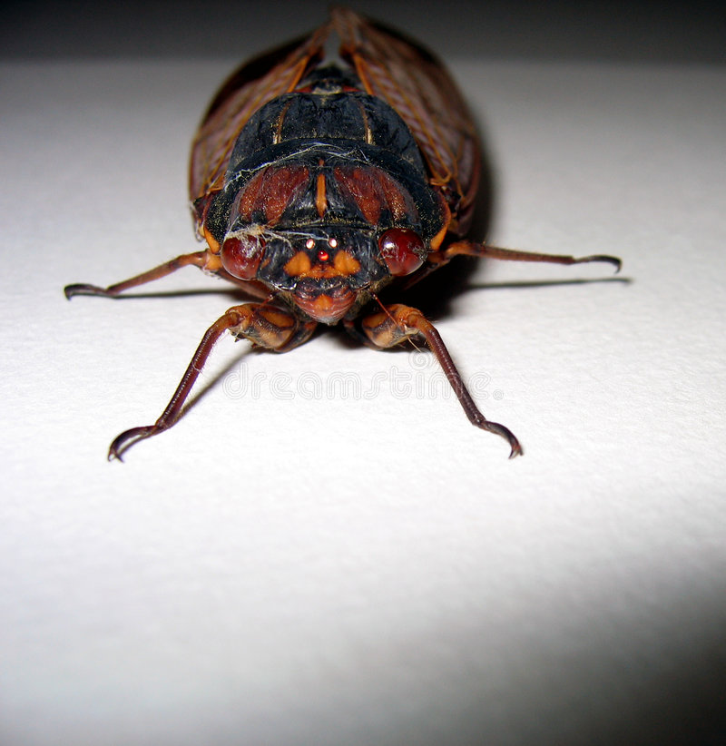 Face to face with a bug royalty free stock image