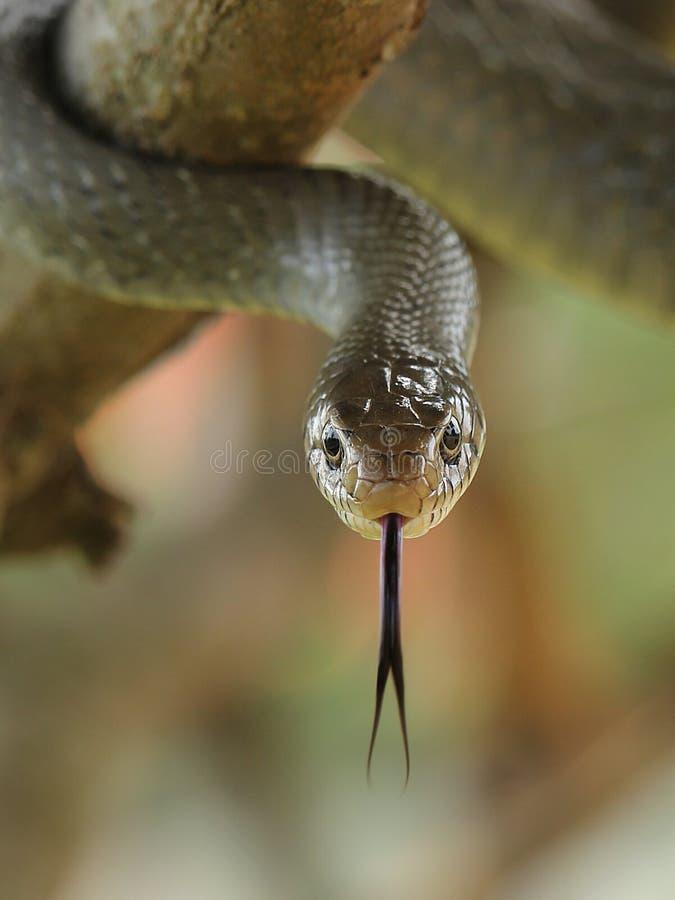 Face to face met een slang royalty-vrije stock foto