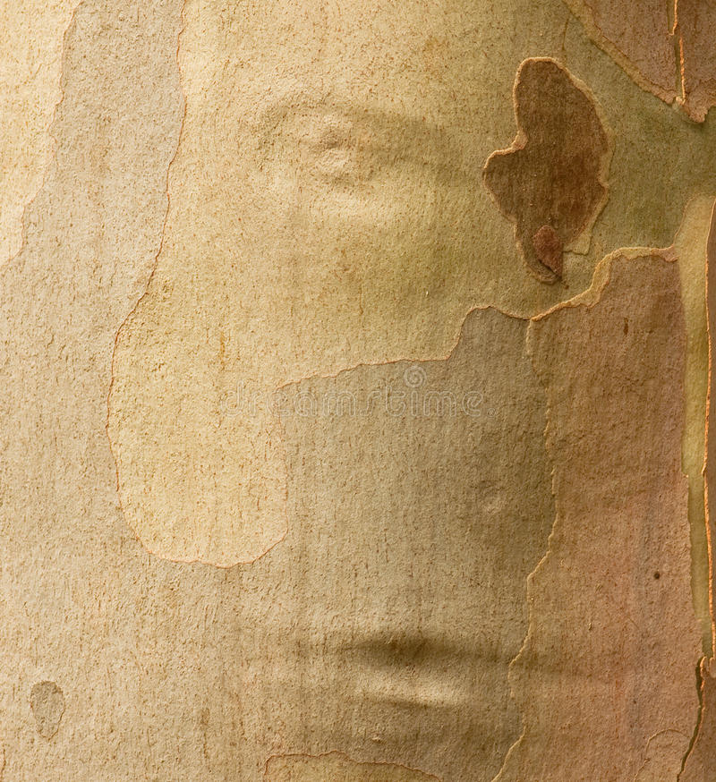 Download Face In The Tree Royalty Free Stock Photos - Image: 16928648