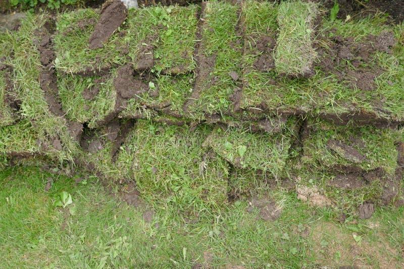 Facendo il giardinaggio, pezzi dell'erba, trapianto delle zolle dell'erba immagine stock libera da diritti