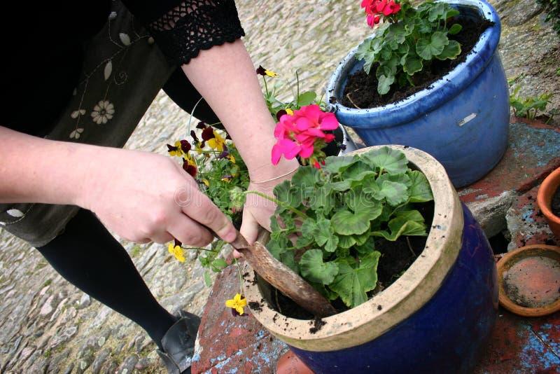Facendo il giardinaggio, piantando i fiori fotografia stock
