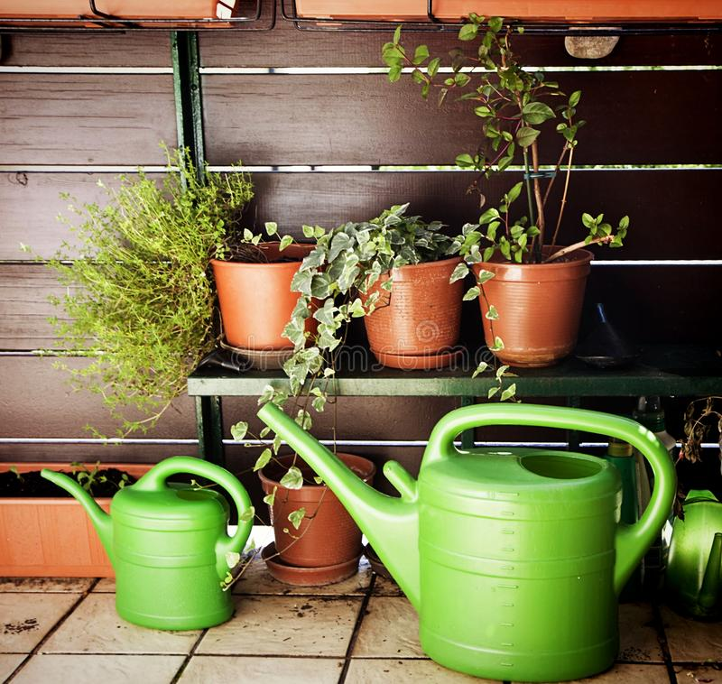 Facendo il giardinaggio sul balcone, sugli annaffiatoi e sulle piante immagini stock