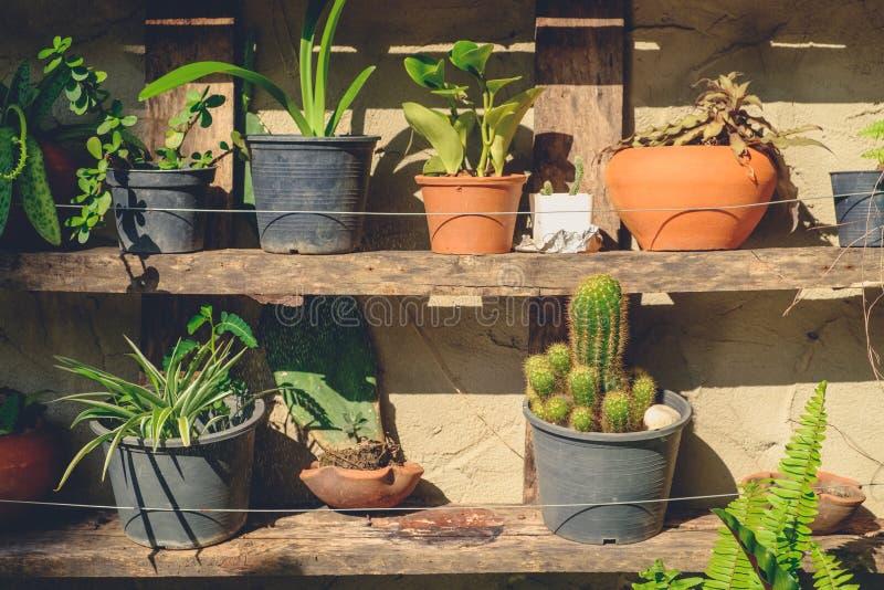 Facendo il giardinaggio sullo scaffale di legno fotografia stock libera da diritti