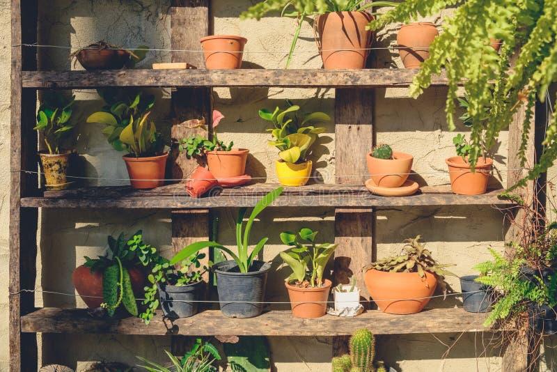 Facendo il giardinaggio sullo scaffale di legno fotografie stock
