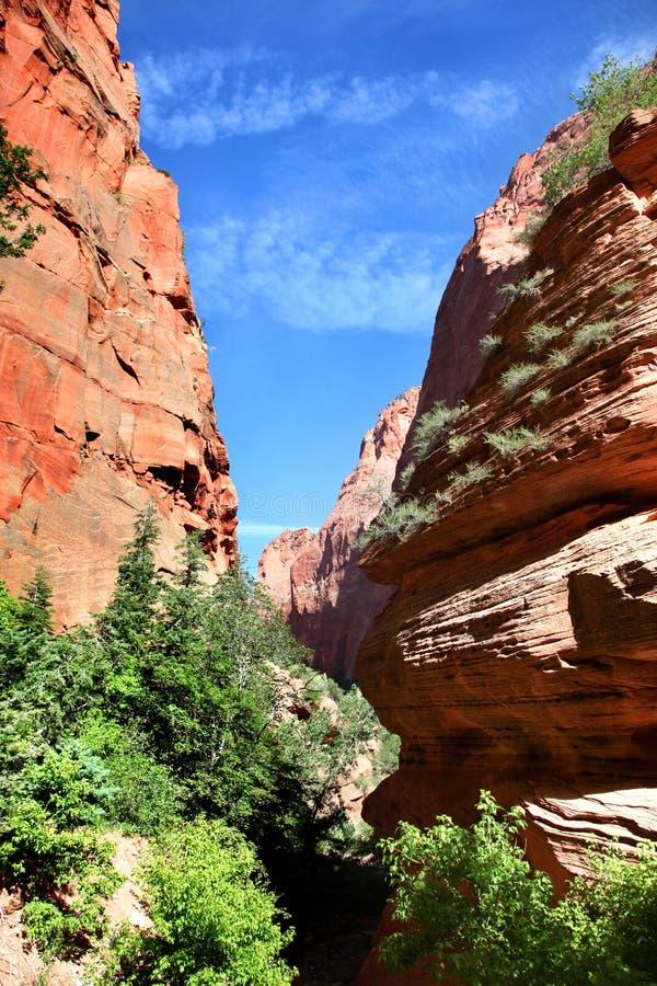 Facendo un'escursione attraverso il canyon a Taylor Creek in Zion National Park immagini stock libere da diritti