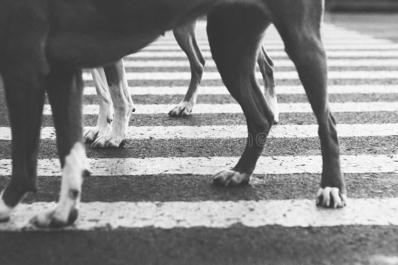 Facendo un'escursione con i cani fotografie stock libere da diritti