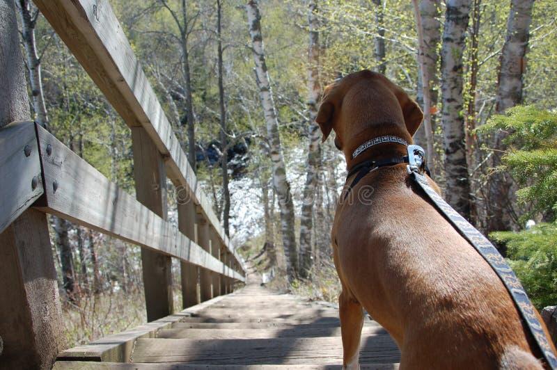 Facendo un'escursione con il cane fotografia stock libera da diritti