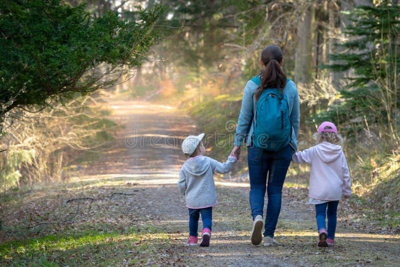 Facendo un'escursione nel legno fotografie stock libere da diritti