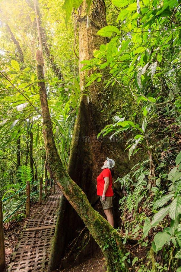 Facendo un'escursione nel parco dei ponti di attaccatura di Arenal fotografia stock