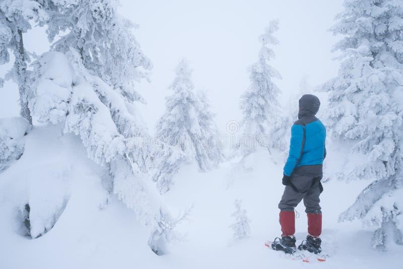 Facendo un'escursione nell'inverno con le racchette da neve immagini stock libere da diritti