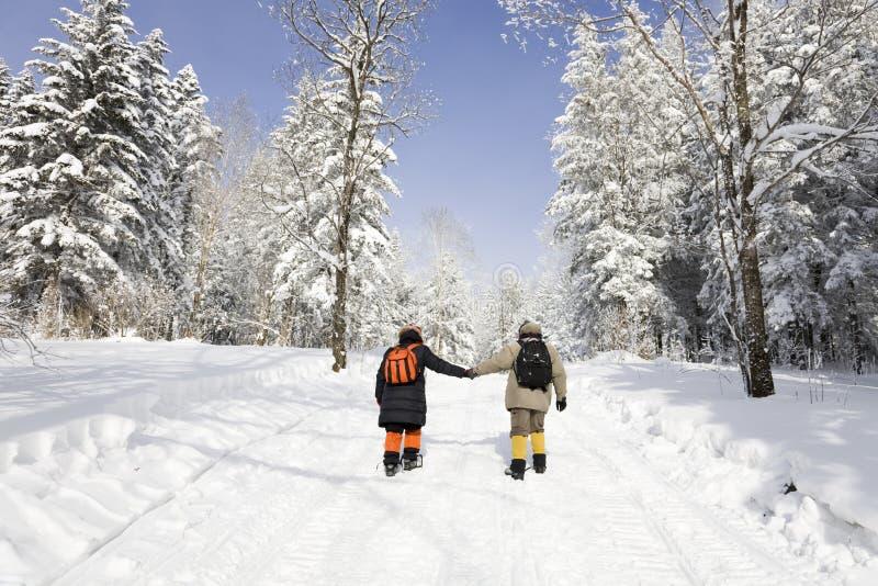 Facendo un'escursione nella foresta nevosa fotografia stock libera da diritti