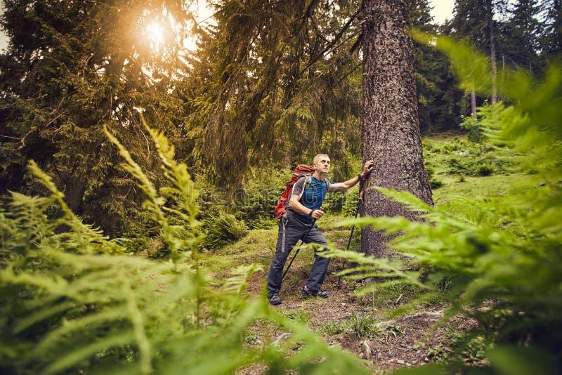 Facendo un'escursione nelle montagne di estate con uno zaino fotografia stock