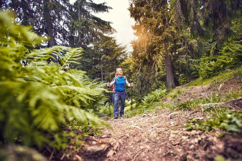 Facendo un'escursione nelle montagne di estate con uno zaino fotografia stock libera da diritti