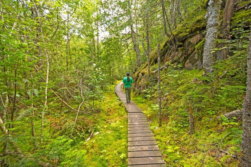 Facendo un'escursione in una regione selvaggia verde fotografie stock libere da diritti