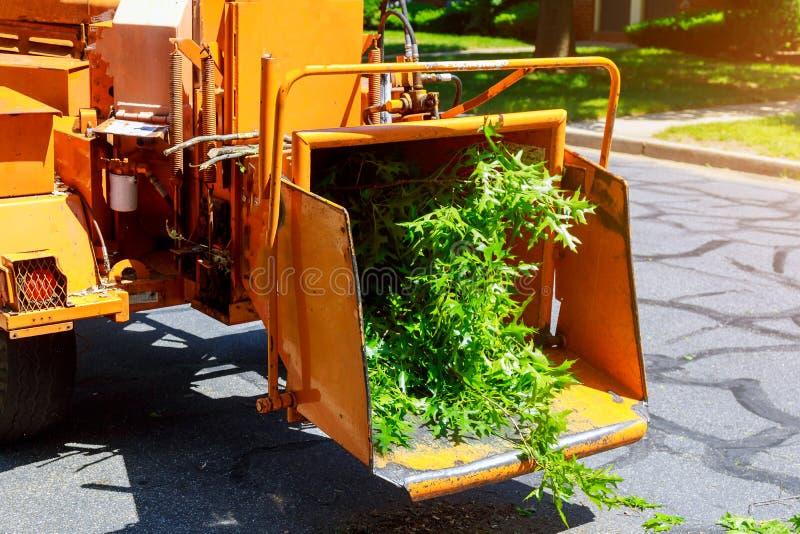 Facendo uso della macchina dello sfibratore da rimuovere e dei rami di albero della motosega fotografia stock