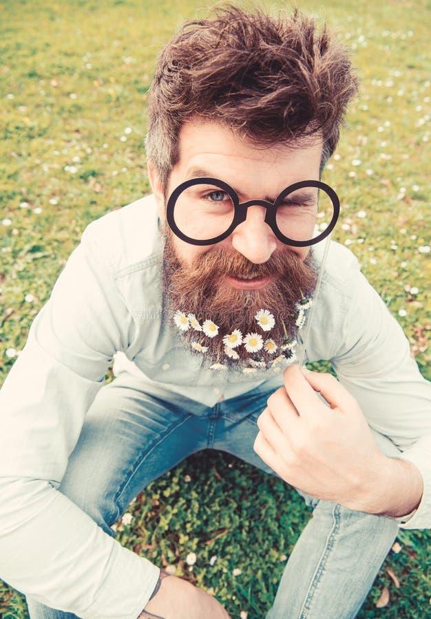 Facetów spojrzenia miło z stokrotki lub chamomile kwiatami w brodzie Wiosny pojęcie Mężczyzna z długą brodą i wąsy zdjęcia stock