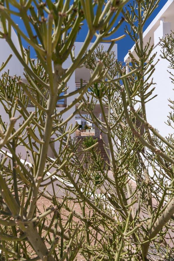 Fachada del hotel en Egipto con los árboles del cactus fotografía de archivo