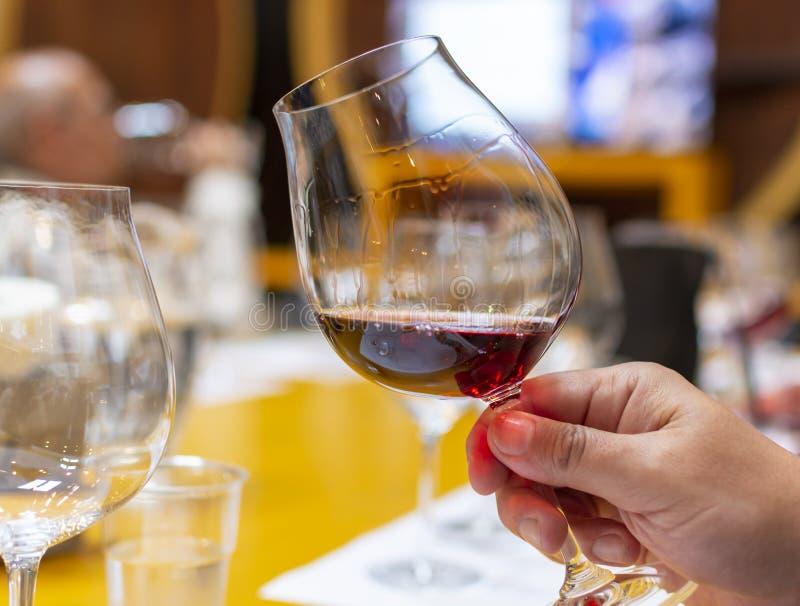 Fachowa wino degustacja, sommelier kurs w wina szkle, patrzeje czerwonego suchego wino obrazy stock