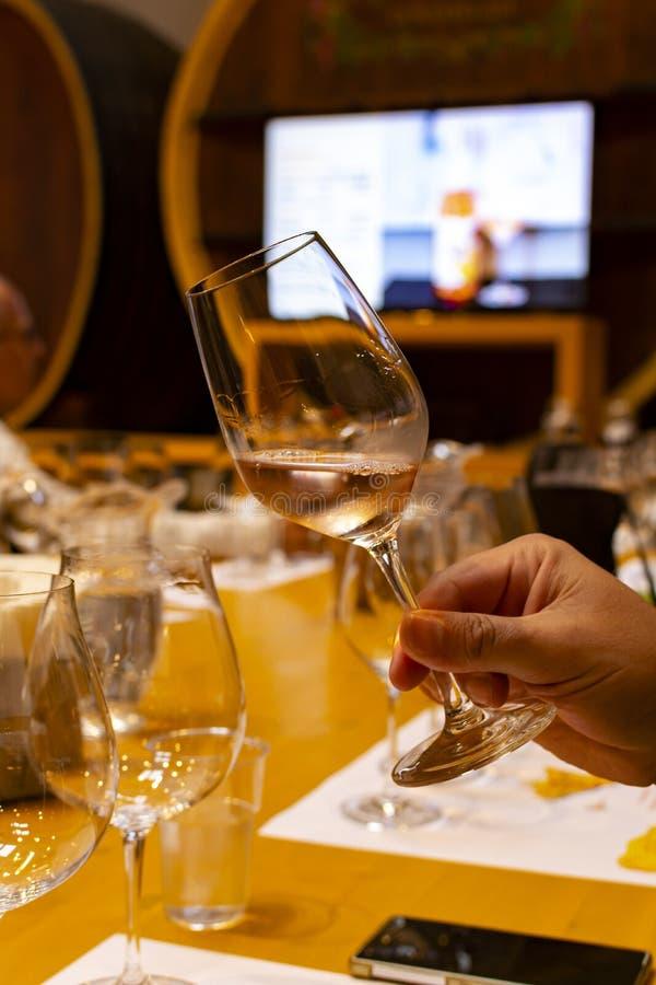 Fachowa wino degustacja, sommelier kurs w wina szkle, patrzeje róży suchego wino obrazy stock
