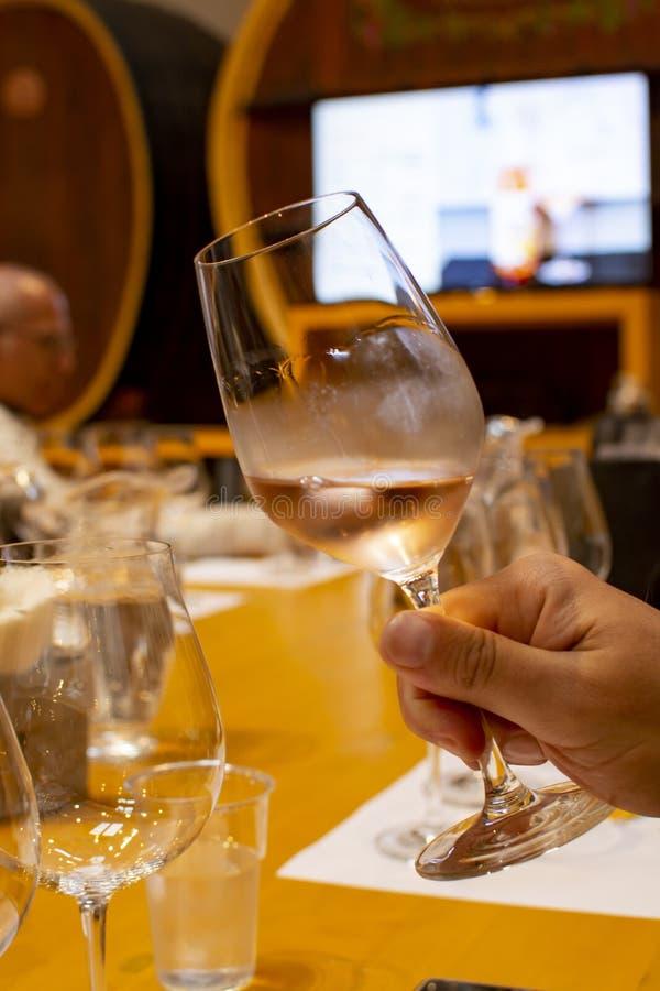 Fachowa wino degustacja, sommelier kurs w wina szkle, patrzeje róży suchego wino zdjęcie royalty free