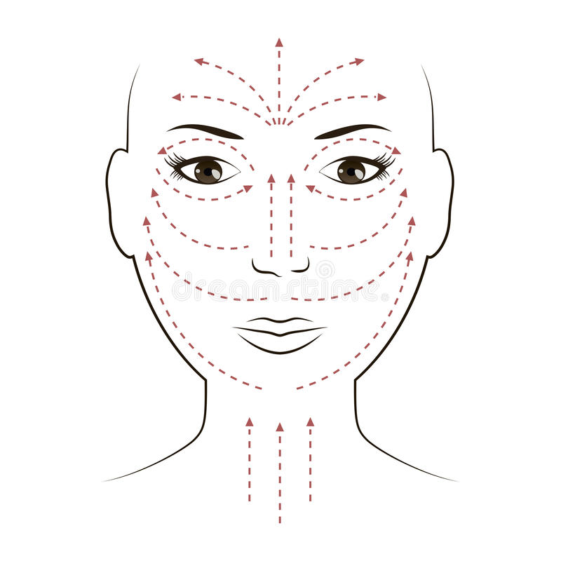 Facial Massage Lines for Applying Cream on Face. And neck. Vector illustration stock illustration