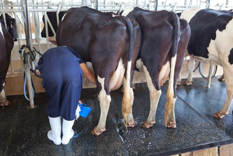 Facilidade de ordenha da vaca imagem de stock