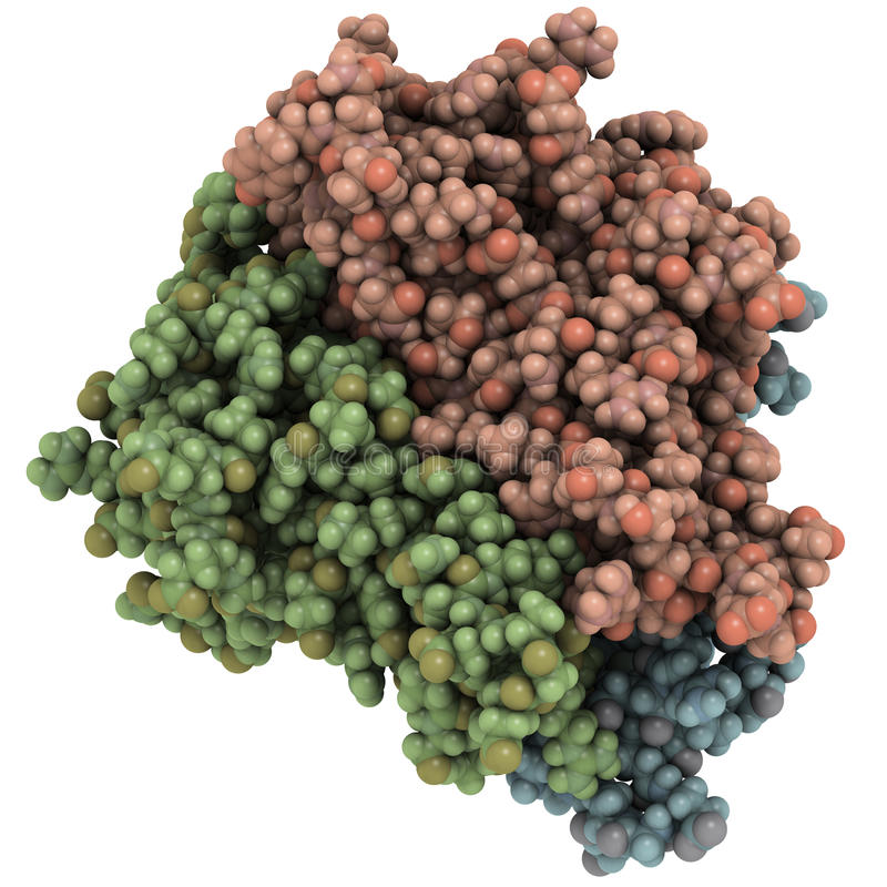 Factor de necrosis de tumor (TNF, cachexin, cachectin) stock de ilustración