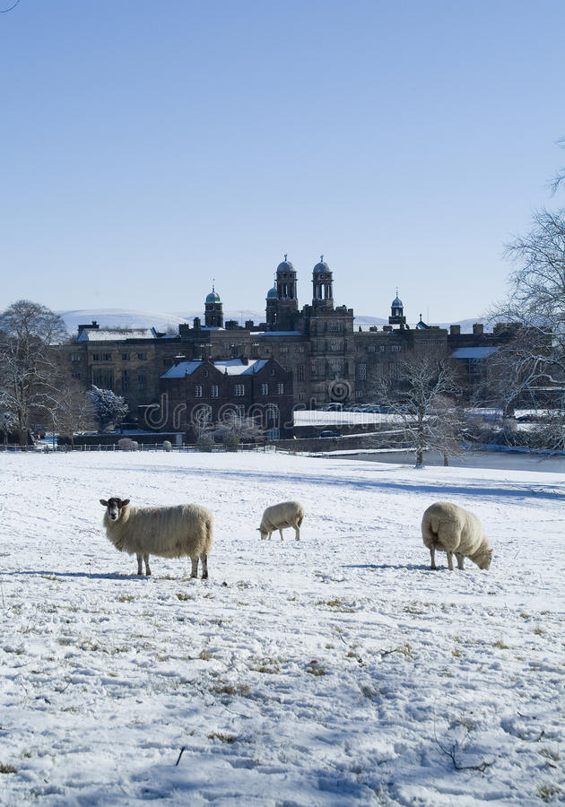Faculdade de Stonyhurst com os carneiros que pastam na neve foto de stock