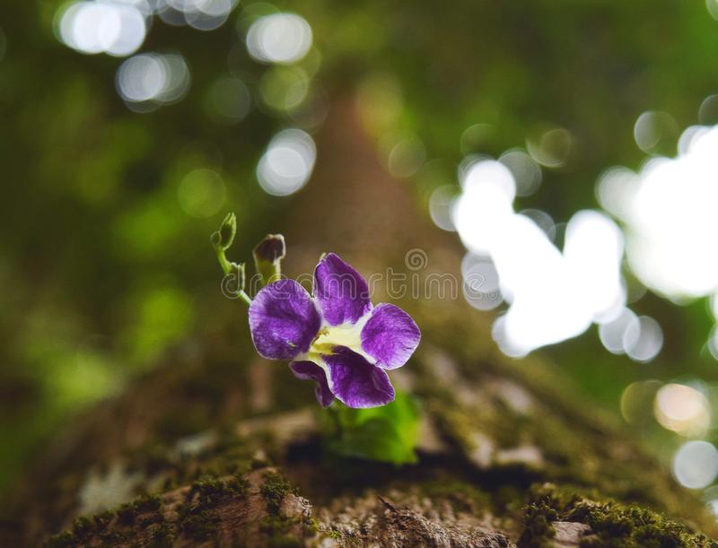 Faded. Flower in the dark royalty free stock images