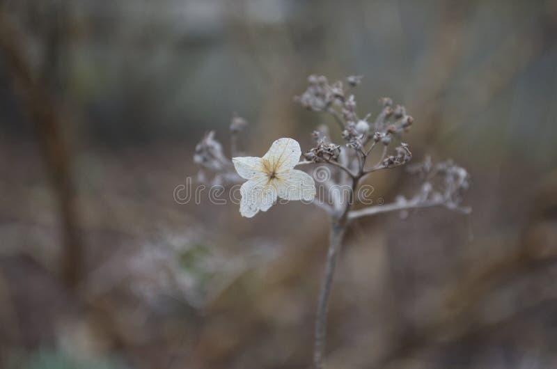 Winter Glory stock image
