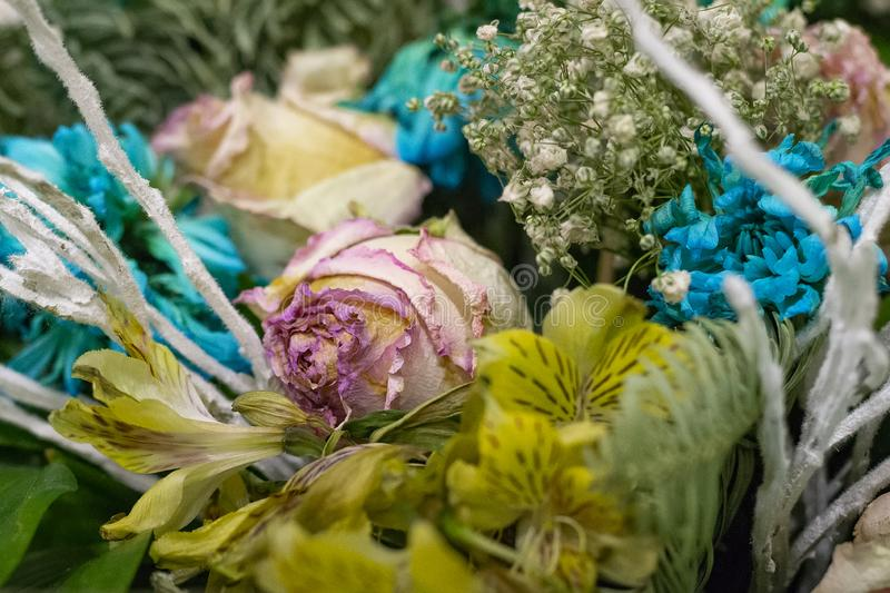 Faded flowers close up. Bouquet of pink roses and turquoise chrysanthemums royalty free stock images