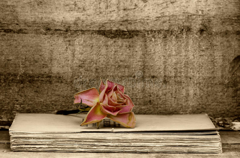 Faded rose royalty free stock photos
