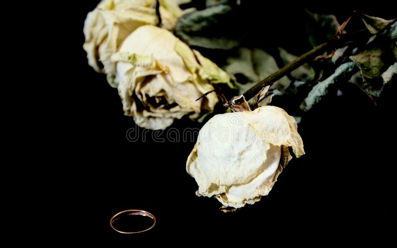 Faded  roses with a wedding ring lie on black velvet on the grave. sadness and depression stock image