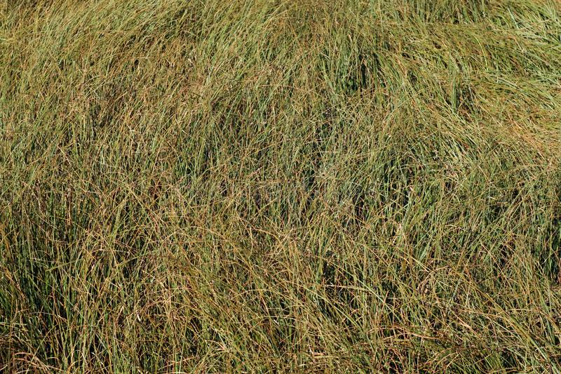 wild grass texture.  Texture Download Faded Wild Grass Pattern Stock Photo Image Of Agriculture   101458760 On Wild Grass Texture S