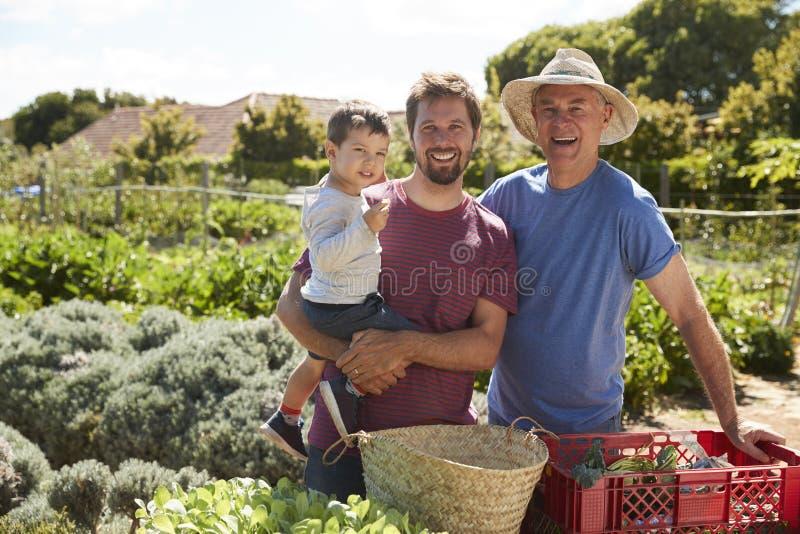 Fader With Adult Son och sonson som arbetar på odlingslott royaltyfri foto