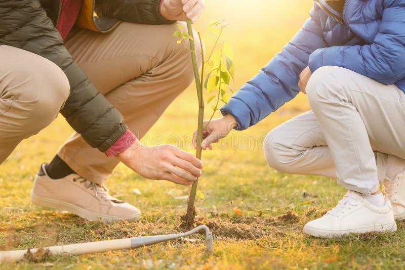 Fader med den lilla sonen som planterar trädet royaltyfri foto