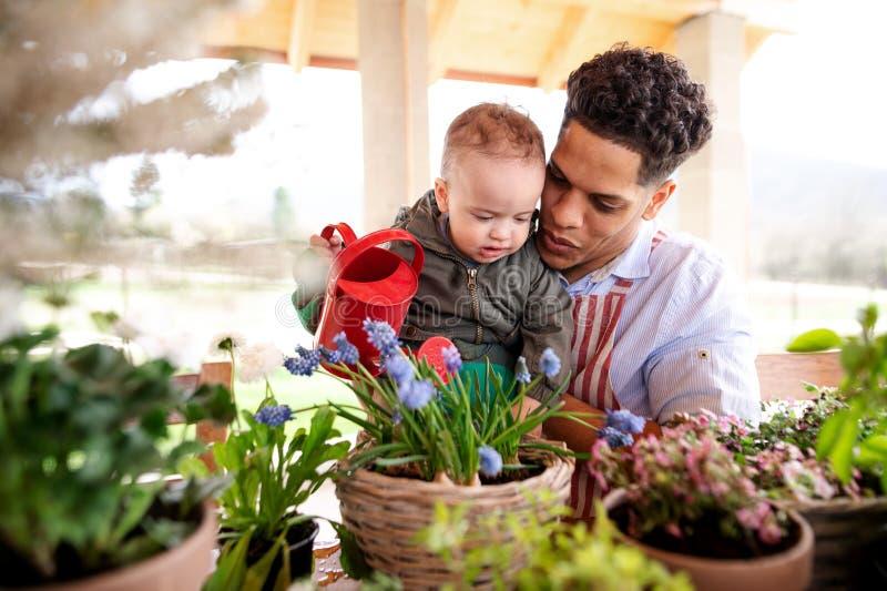 Fader och liten litet barnson inomhus hemma och att bevattna blommor arkivbild