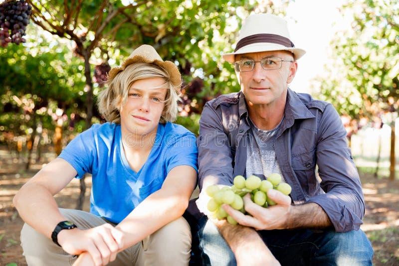 Fader och son i vingård arkivbild