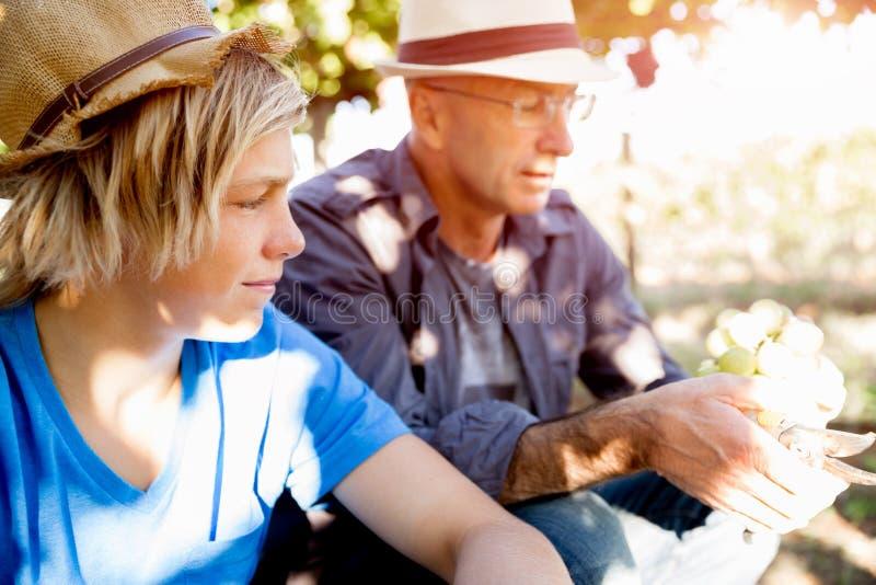 Fader och son i vingård royaltyfria bilder