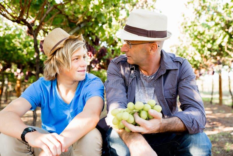 Fader och son i vingård royaltyfri bild