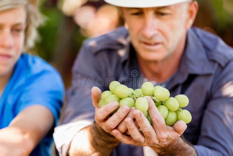 Fader och son i vingård royaltyfri foto