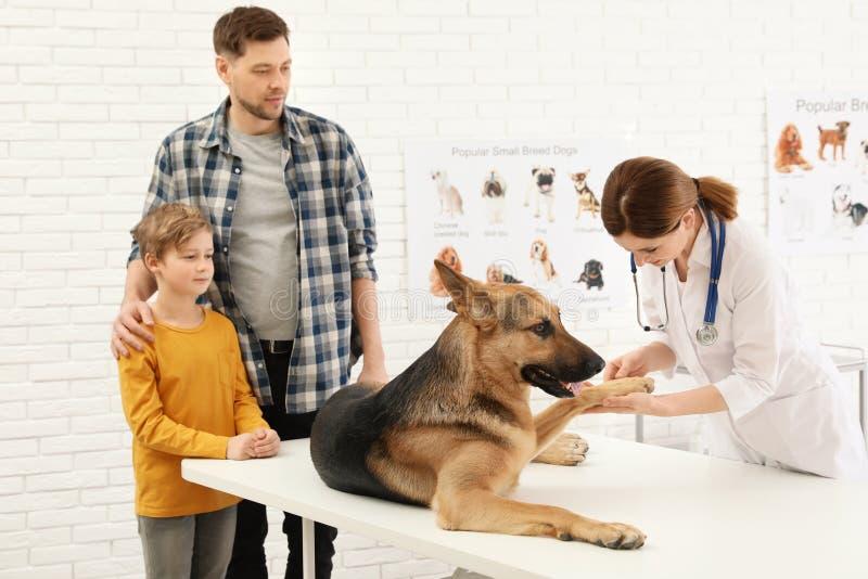 Fader och son med deras husdjur som besöker veterinären i klinik arkivfoto