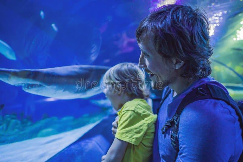 Fader och son som ser fisken i ett tunnelakvarium arkivfoton