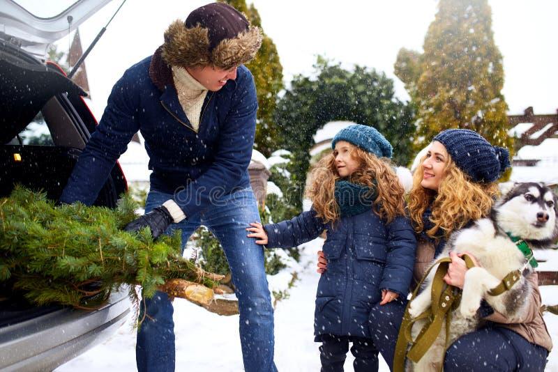 Fadern kom med julträdet i stor stam av SUV bilen Dotter-, moder- och hundmötefarsa lyckligt att hjälpa honom med arkivfoton