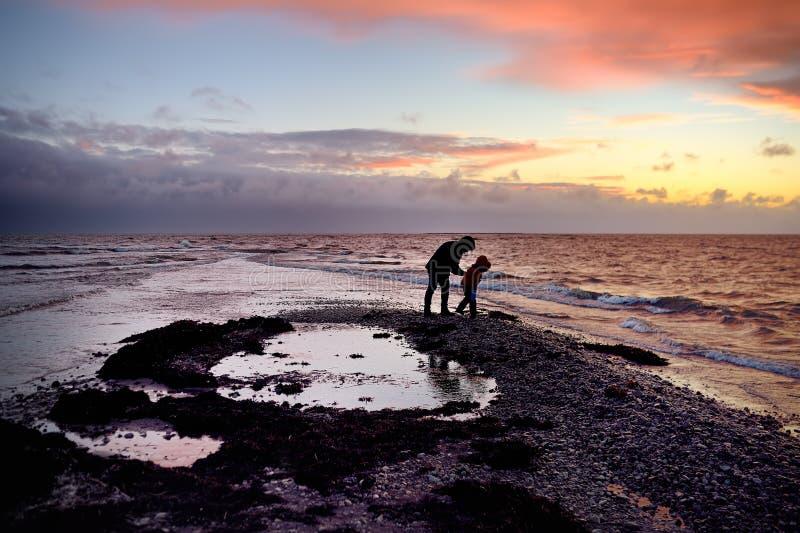 Fadern och sonen promenerar kusten på solnedgången på den sydliga spetsen av Saaremaa, Estland royaltyfri foto