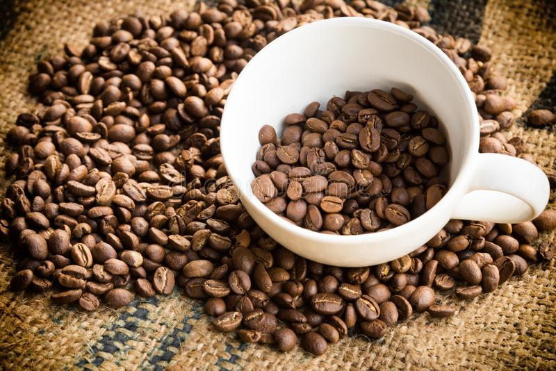 Fagioli del caffè Arabica in tazza di caffè con il fondo del panno di sacco Chicco di caff? arrostito immagini stock libere da diritti