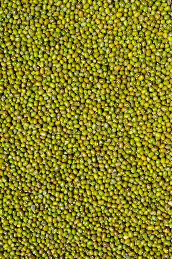 Fagioli verdi fotografie stock