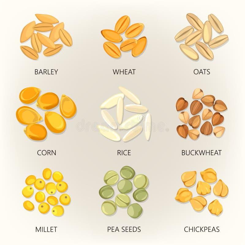 Fagiolo e grani della pianta stagionale, icone del seme illustrazione vettoriale